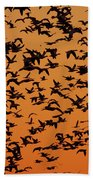 Snow Goose Migration Beach Towel by Mircea Costina Photography
