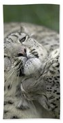 Snow Leopards Playing Beach Towel