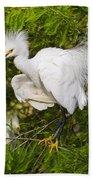 Snowy Egret In Breeding Plumage Beach Towel