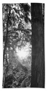 Snowy Forest Bw Beach Towel