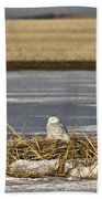 Snowy Owl Perched Frozenpond Beach Towel