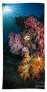 Soft Coral And Sunburst In Raja Ampat Beach Towel
