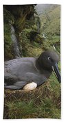 Sooty Albatross Phoebetria Fusca Beach Towel