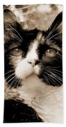 Souls Great And Small 2 Beach Towel