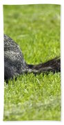 Southern Fox Squirrel Beach Towel by Phill Doherty