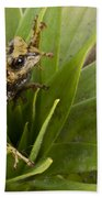 Southern Frog Newly Discovered Species Ecuador Beach Towel