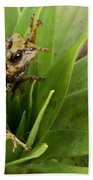 Southern Frog Pristimantis Sp, Newly Beach Towel