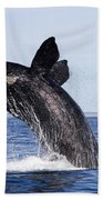 Southern Right Whale Beach Towel
