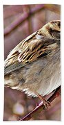 Sparrow II Beach Towel