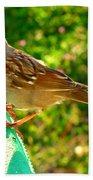 Sparrow In Morning Light  Beach Towel
