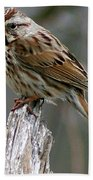 Sparrow Iv Beach Towel