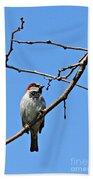 Sparrow On The Branch Beach Towel