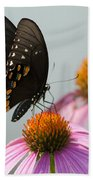 Spicebush Butterfly On Echinacea Beach Towel