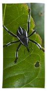 Spider Weevil Papua New Guinea Beach Towel