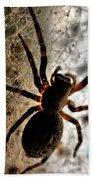 Spiders Home Beach Towel