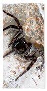 Spiders Trap Beach Towel