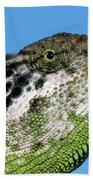 Spiny Chameleon Chamaeleo Verrucosus Beach Towel