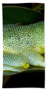 Spiny Glass Frog Beach Towel