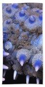 Spiny Starfish Marthasterias Glacialis Beach Towel