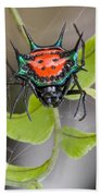 Spinybacked Orbweaver Spider Solomon Beach Towel