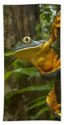 Splendid Leaf Frog  Costa Rica Beach Towel