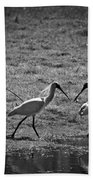 Spoonbills Beach Towel