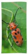 Spotted Asparagus Beetle - Crioceris Duodecimpunctata Beach Towel