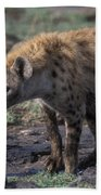 Spotted Hyena Beach Towel