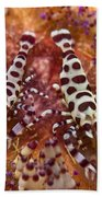 Spotted Periclimenes Colemani Shrimp Beach Towel