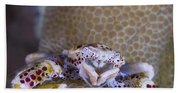 Spotted Porcelain Crab Feeding Beach Towel