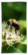 Spring Pollination Beach Towel