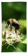 Spring Pollination Beach Sheet