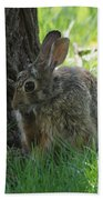 Spring Rabbit Beach Towel
