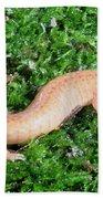 Spring Salamander Beach Towel