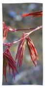 Springtime Japanese Maple Leaves Beach Towel