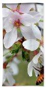 Springtime Weeping Cherry Tree Beach Towel