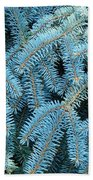 Spruce Conifer Nature Art Prints Trees Beach Towel