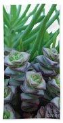 Squarely Purple Succulent Crassula Baby Necklace Beach Towel
