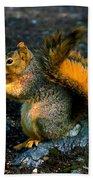 Squirrel At Riverfront Park Beach Towel