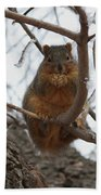 Squirrel Eating In The Frost Beach Towel