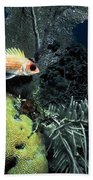 Squirrel Fish Beach Towel