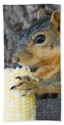Squirrel Holding Corn Beach Towel