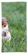 Squirrel Beach Towel