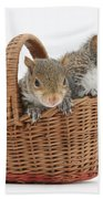 Squirrels In A Basket Beach Towel by Mark Taylor