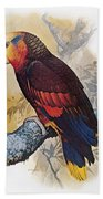 St Vincent Amazon Parrot Beach Towel