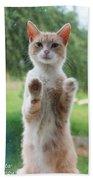 Standing Cat Beach Towel