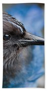 Stellars Jay Up Close And Personal Beach Towel