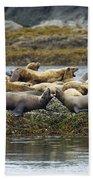 Stellers Sea Lion Eumetopias Jubatus Beach Towel