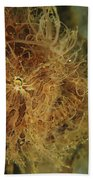 Striated Frogfish, North Sulawesi Beach Towel