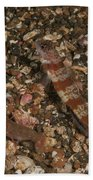 Striated Goby And Blind Shrimp, North Beach Towel